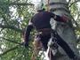 treballs forestals GS