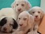 Centro canino Berquir